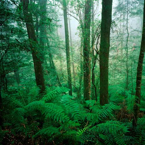 Dwellings answer: RAINFOREST