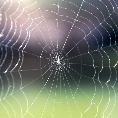 Dwellings answer: WEB