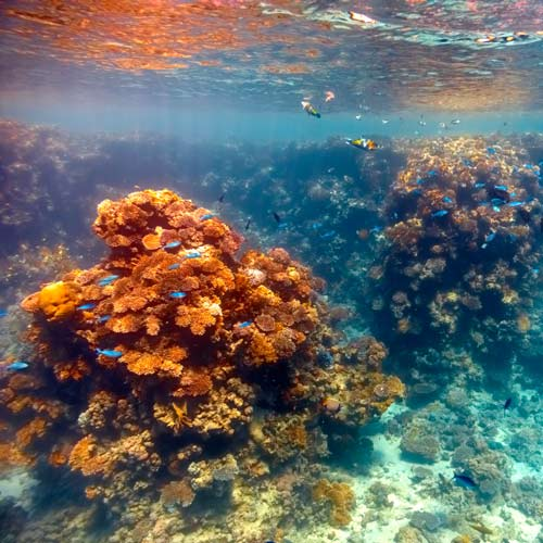 Dwellings answer: CORAL REEF