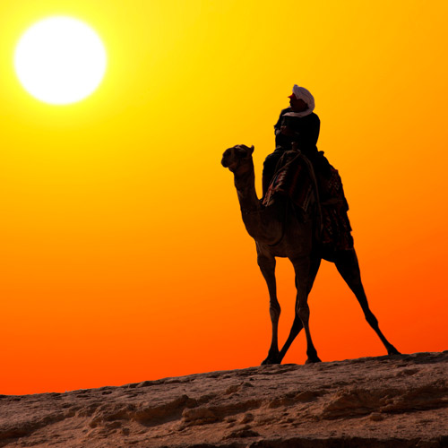 Experiences answer: RIDE A CAMEL