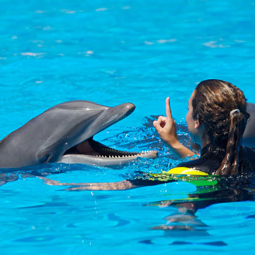 Experiences answer: DOLPHIN SWIM
