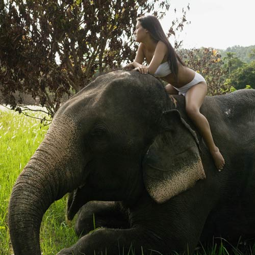 Experiences answer: RIDE AN ELEPHANT
