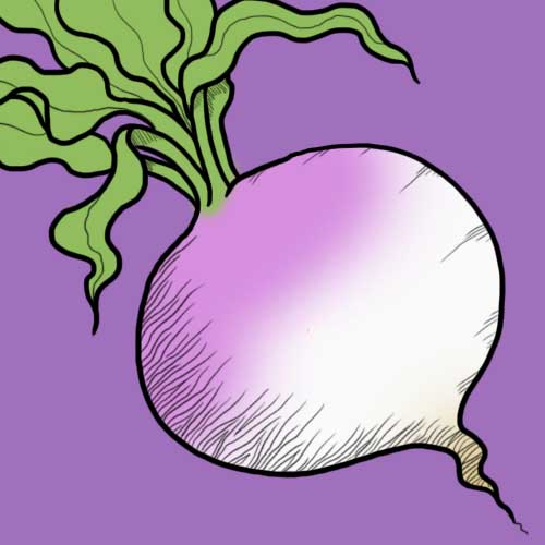 Fairy Tales answer: TURNIP