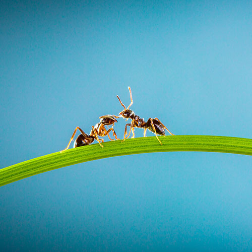 Gardening answer: ANTS