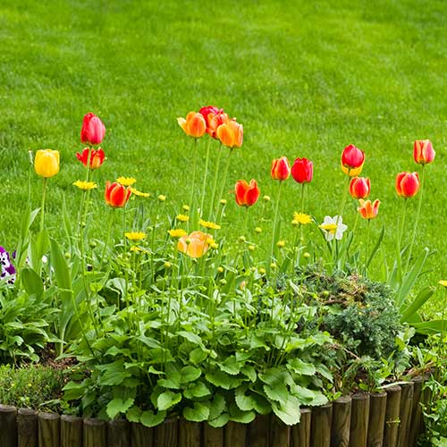 Gardening answer: FLOWERBED