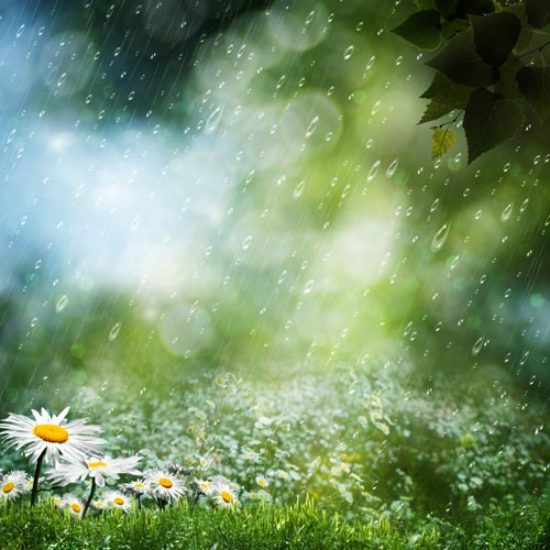 Gardening answer: PRECIPITATION