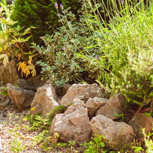 Gardening answer: ROCKERY