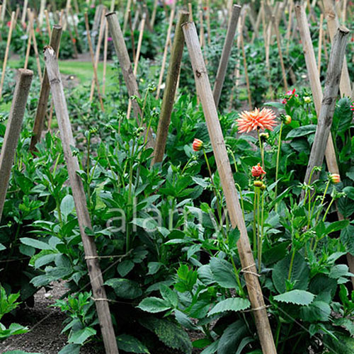 Gardening answer: STAKES
