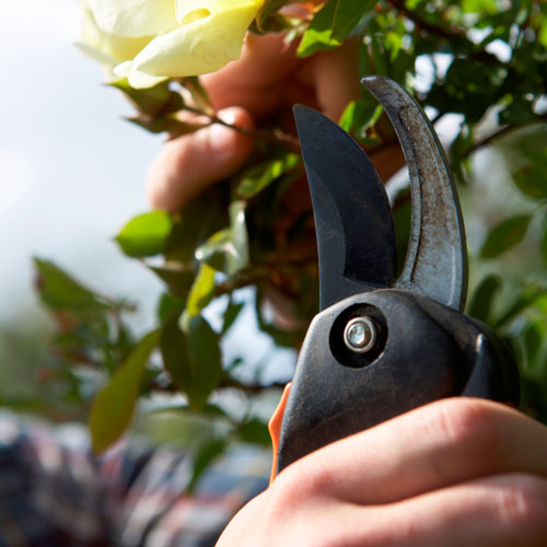 Gardening answer: SECATEURS