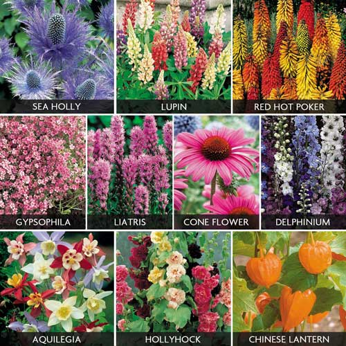 Gardening answer: PERENNIALS