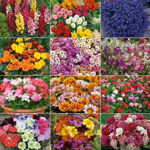 Gardening answer: ANNUALS