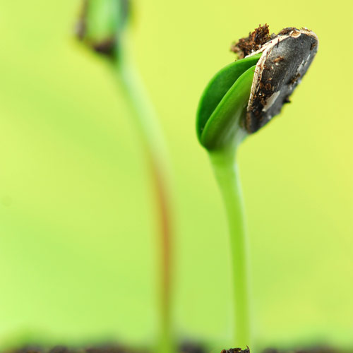 G is for... answer: GERMINATE