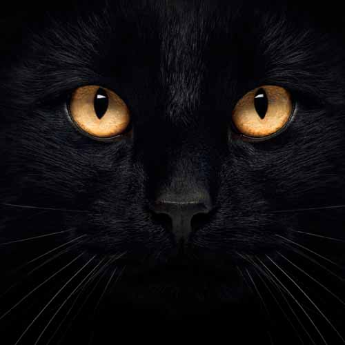 Halloween answer: BLACK CAT