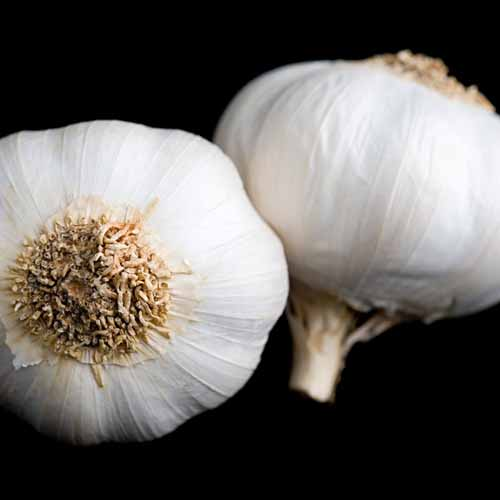 Halloween answer: GARLIC