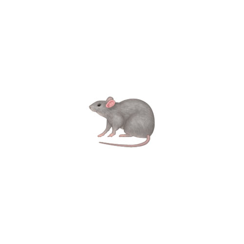 Halloween Emoji answer: RAT