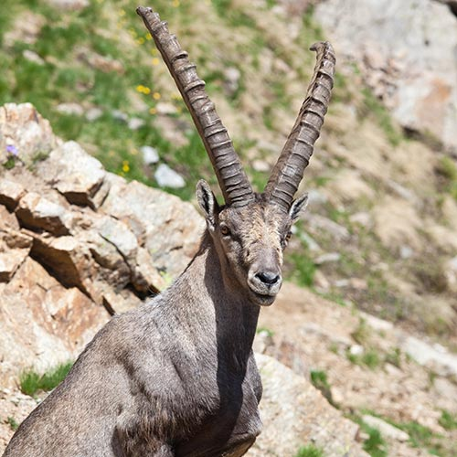 I is for... answer: IBEX