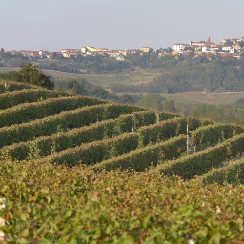 I Love Italy answer: VINEYARD