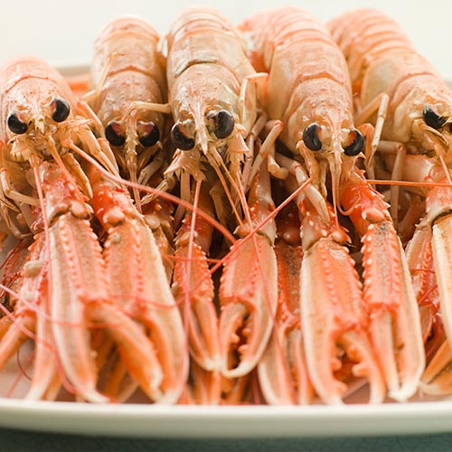 L is for... answer: LANGOUSTINES