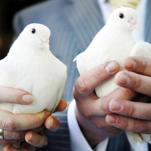 Love answer: DOVES