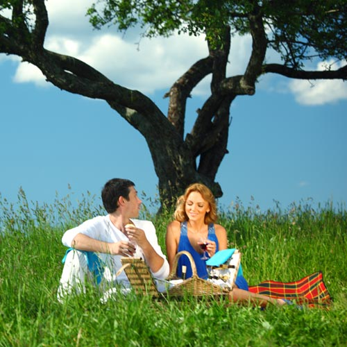 Love answer: PICNIC