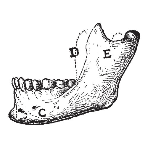 M is for... answer: MANDIBLE