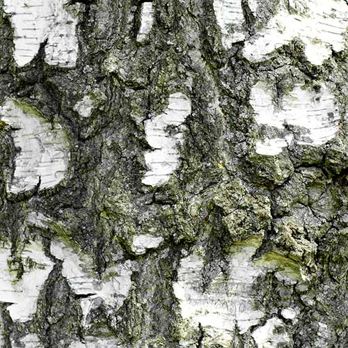 Nature answer: BARK