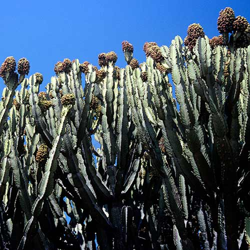 Nature answer: CACTI