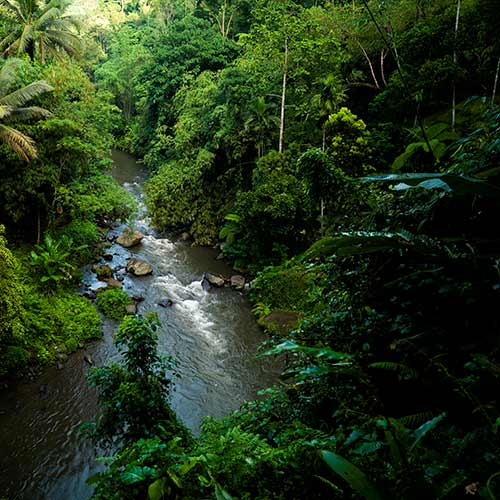 Nature answer: RAINFOREST