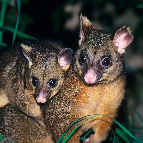 Nature answer: MARSUPIALS