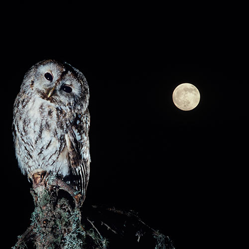 Nature answer: NOCTURNAL