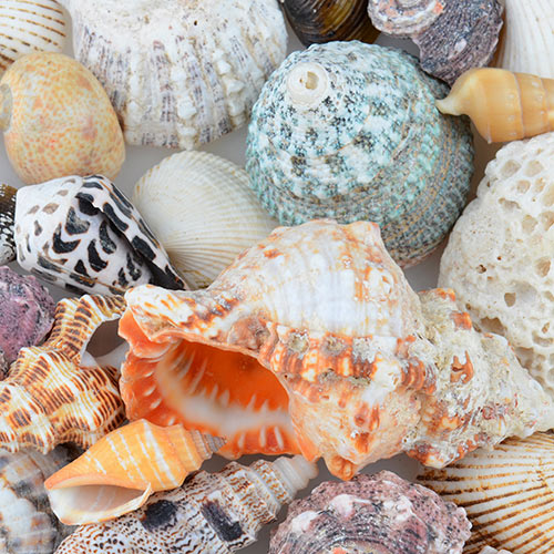 Nature answer: SHELLS