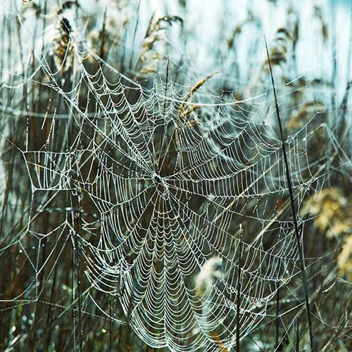 Nature answer: SPIDERS WEB