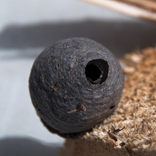 Nature answer: WASPS NEST