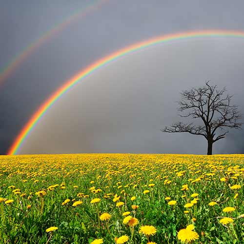 Nature answer: DOUBLE RAINBOW