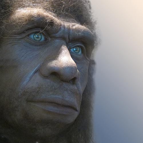 N is for... answer: NEANDERTHAL