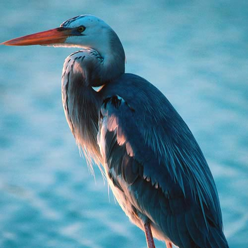 North America answer: HERON