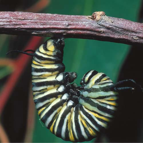 North America answer: CATERPILLAR
