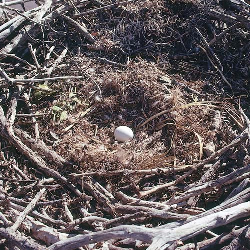 North America answer: NEST
