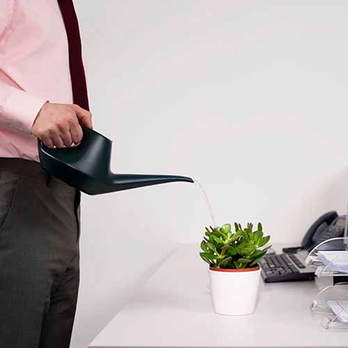 Office answer: DESK PLANT