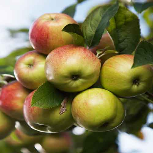 On The Farm answer: APPLES