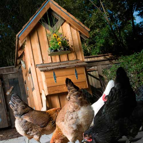 On The Farm answer: CHICKEN COOP