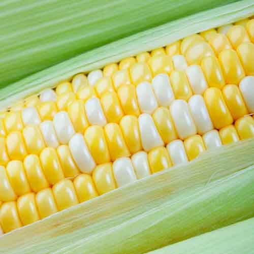 On The Farm answer: CORN