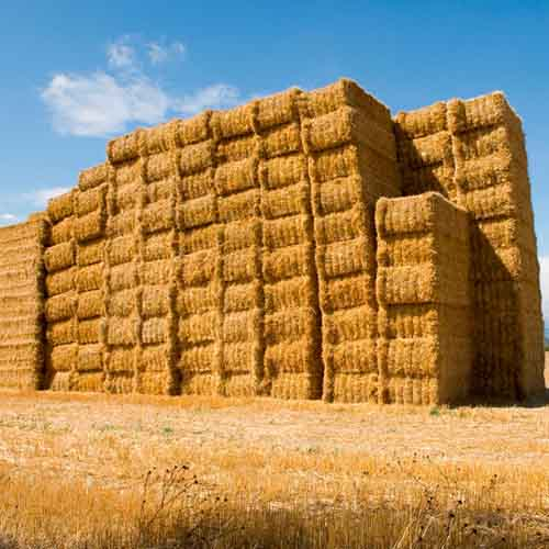 On The Farm answer: HAY STACK