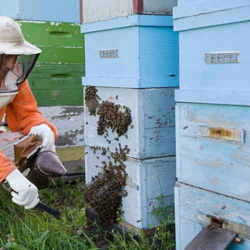 On The Farm answer: HIVE