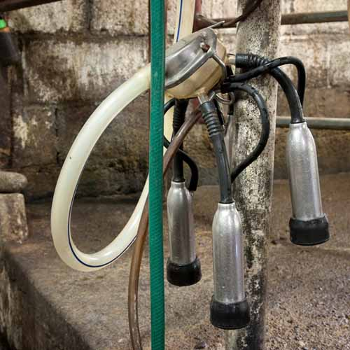 On The Farm answer: MILKING MACHINE