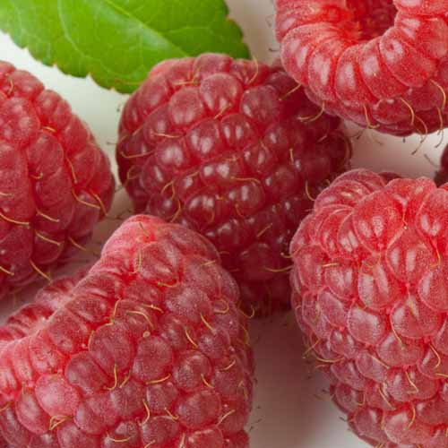 On The Farm answer: RASPBERRIES