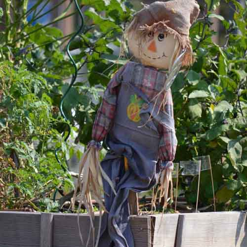 On The Farm answer: SCARECROW