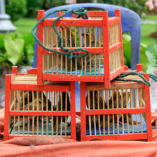 Pets answer: CAGES