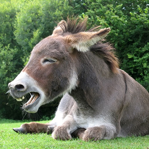 Pets answer: DONKEY