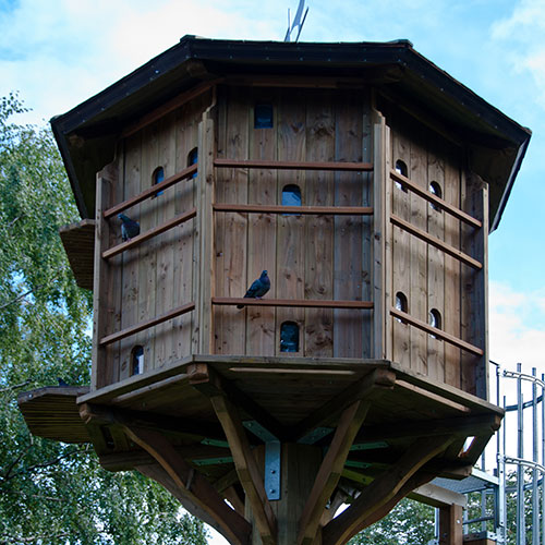 Pets answer: DOVECOTE